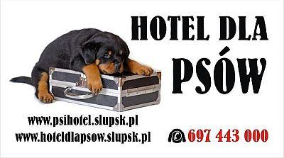 Zapraszamy do hotelu dla psów